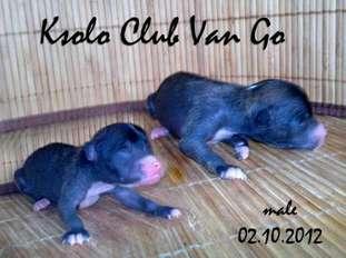 Ksolo Club Van Go