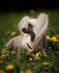 Dogland Happy Izabella