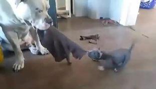 Test Hund 123