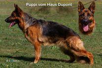 Püppi vom Haus Dupont