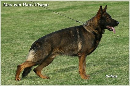 Max vom Haus Cismar