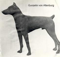 Gunzelin von Thüringen-ronneburg-jägerhof