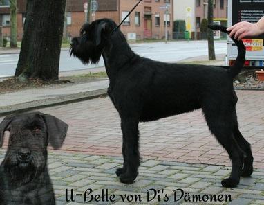 U-Belle von Di's Dämonen