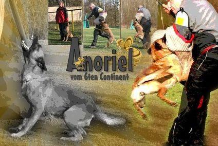 Anoriel vom 6ten Continent