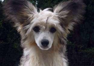 Be My Dog's La Vita E Bella