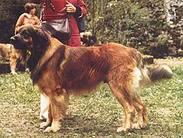 King V. Rüttihubel