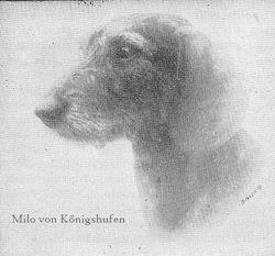 Milo von Königshufen
