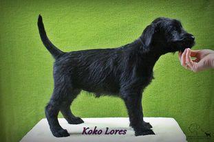 Koko Lores vom Ravener Forst