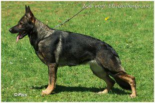 Zoe vom Ebsdorfergrund