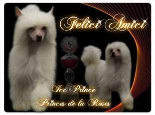 Ice Prince Of Princes De La Roses