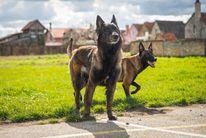 Rumba Doakimo Dog