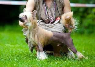 Dogland Happy Zodiak