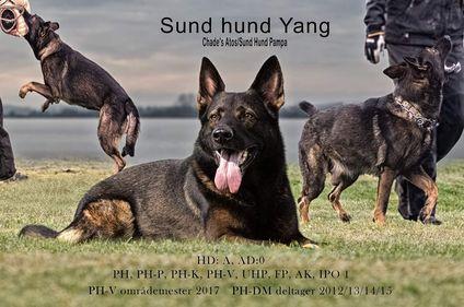 Sund Hund Yang