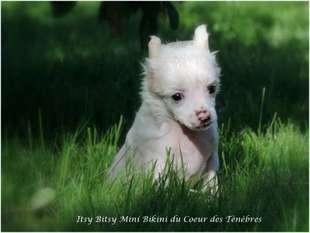 Itsy Bitsy Mini Bikini Du Coeur Des Tenebres