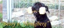 Bessy vom Honigberg