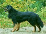 Irko vom Hundsbühl