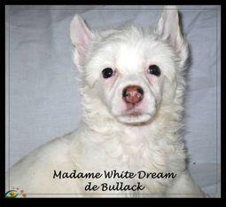 Madame White Dream De Bullack