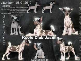 Ksolo Club Jasmin