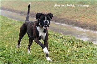 Rhea vom Rehfeld