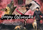 Hoopy Ostraryka