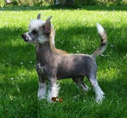 Be My Dog's Al Bakarah