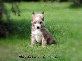 Ilthy Du Coeur Des Tenebres
