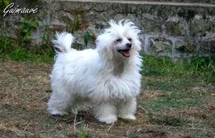 Buddy Doggz Star Guimauve
