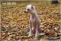 Mimi Dog Doll Wind Queen