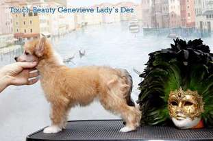 Touch Beauty Genevieve Lady's Dez