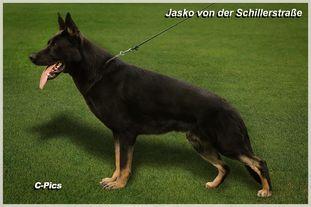 Jasko von der Schillerstraße
