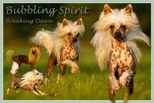 Bubbling Spirit Breaking Dawn