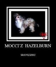 Mocci'z Hazelburn