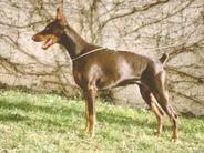 Brown Lady V. Schnuppe