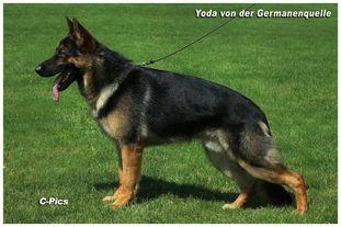 Yoda von der Germanenquelle