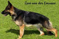Zari von der Emsaue