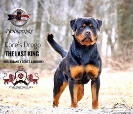 Core's Drogo The Last King