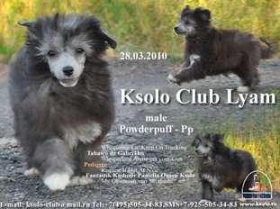 Ksolo Club Lyam