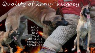 Quality of Kanu's Legacy