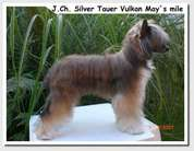 Silver Tauer Vulkan May's Mile