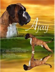 Ajay vom Boxerfeuer