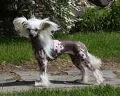 Dogcastle's Body Buff