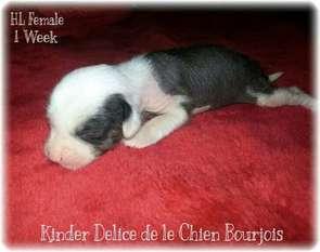 Kinder Delice De Le Chien Bourjois