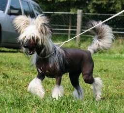 Be My Dog's Kalimba De Luna