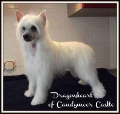 Dragonheart Of Candymoor Castle