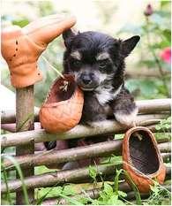 Dogland Happy Valiant Prince
