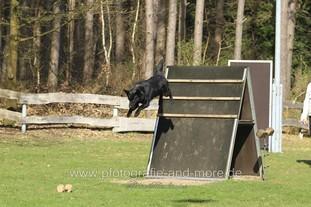 Wolf vom Haus Ritterland