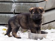Litter L - 5 weeks
