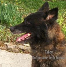 Tobby du Domaine de la Jurence