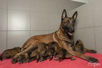 Pups O'Pepper & Linck 2 weken