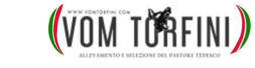 Vom Torfini